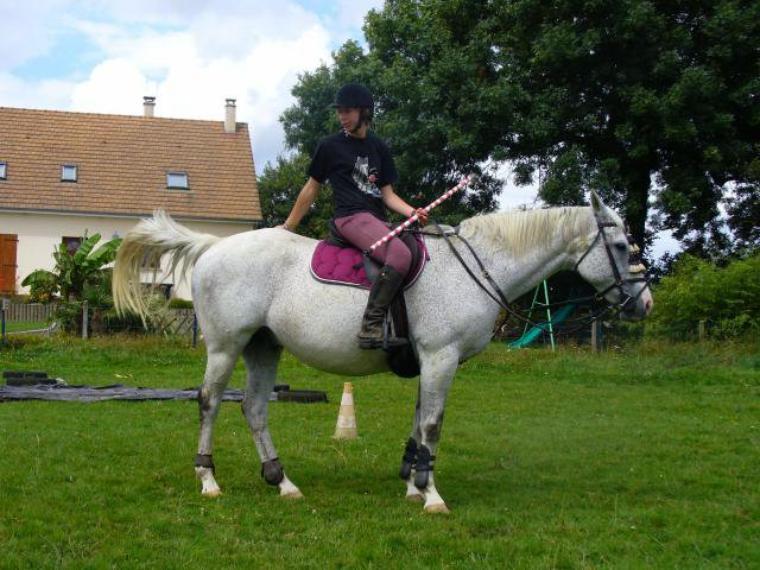 """""""Si une personne vous dit 'Ce n'est qu'un cheval' , Contentez vous de sourire il ne peut pas comprendre """""""