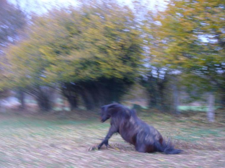 Un cheval; le cheval de votre vie, vous fera mal une fois.Une seule fois. Et ce sera le jour où vous devrez le quitter.