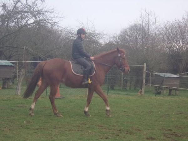 « La fidélité d'un cheval est un don précieux qui entraine une responsabilité moral non moins contraignante que l'amitié de l'être humain. Le lien établi avec un cheval est aussi durable que peut l'être un lien terrestre. »