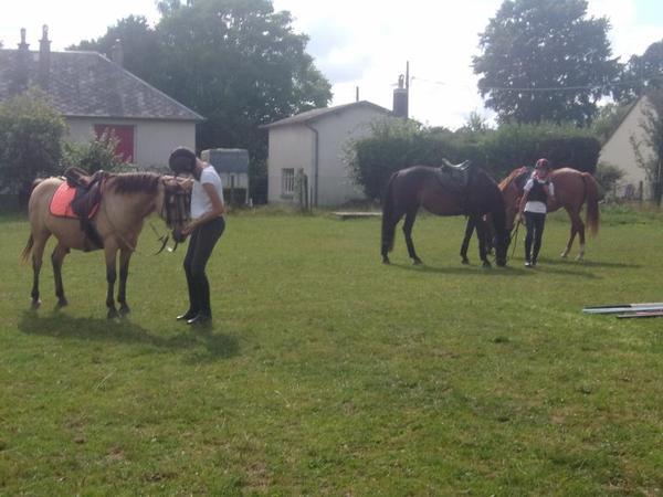 """""""Sois déraisonnable, mais ne veux rien que le cheval ne veuille."""""""