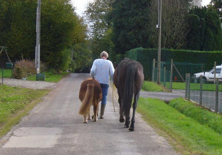 """""""La noblesse du cheval''... apparaît au grand jour quand les hommes lui permettent de s'exprimer et de prendre sa vraie place... comme l'avaient déjà compris certains peuples... """""""