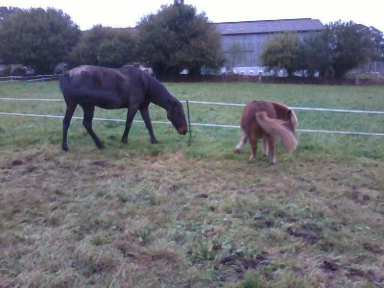 """"""" Le respect du cheval, c'est la fondation de la liberté."""""""