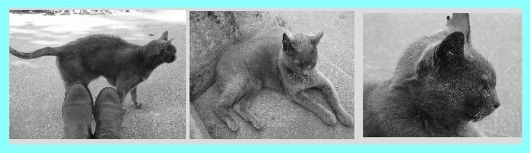 Cheval : le seul animal dans lequel on puisse planter des clous.