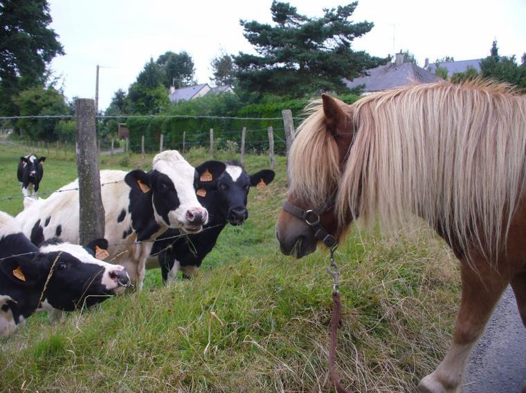 """"""" Petit poney emmène moi dans ton pays magique, dans mon monde à moi où il y a que des poneys qui mangent des arc-en-ciel et font des cacas papillons !"""" :"""