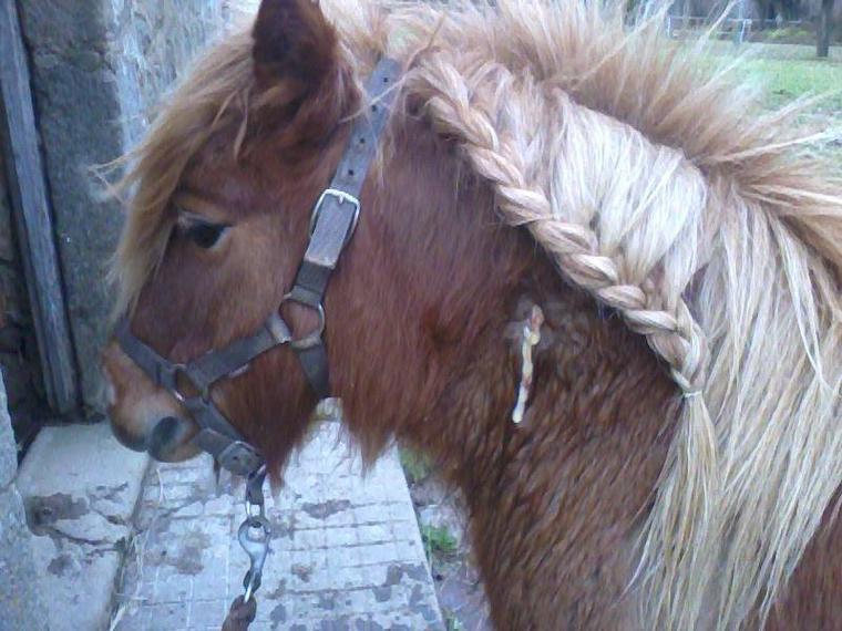 """"""" Nous n'avons pas à choisir notre cheval, si il tient à nous il viendras vers nous ! """""""