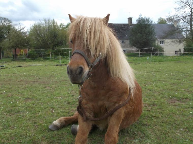 """"""" Le Dressage est fait pour le cheval et non le cheval pour le dressage ! """""""