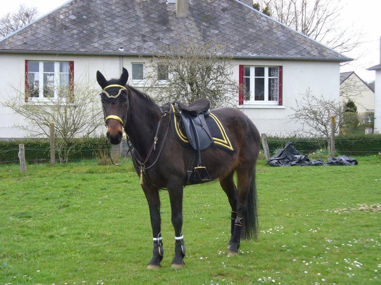 Écouter son cheval oblige à s'adapter à l'humeur et au langage corporel du cheval d'une manière complètement non-verbale et socio-sensuelle... tout en prenant en considération le fait que sa monture a des préférences et des aversions, des pensées et des intuitions.