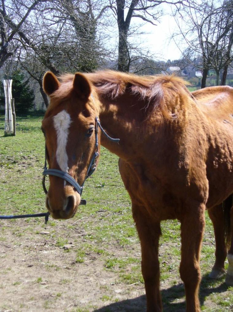 Les chevaux nous astreignent à rester présents. Ils se cabrent et font des ruades, ils prennent le mors aux dents pour nous rappeler que tout se passe ici et maintenant.