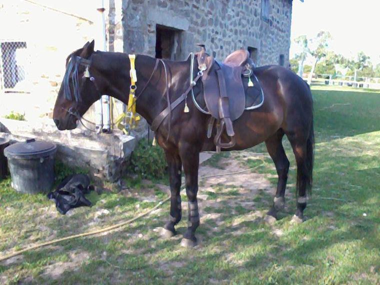 """"""" Le cheval est le seul piédestal où l'on apprenne la modestie """""""