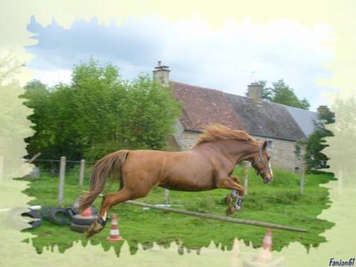 Alois et Funky en saut