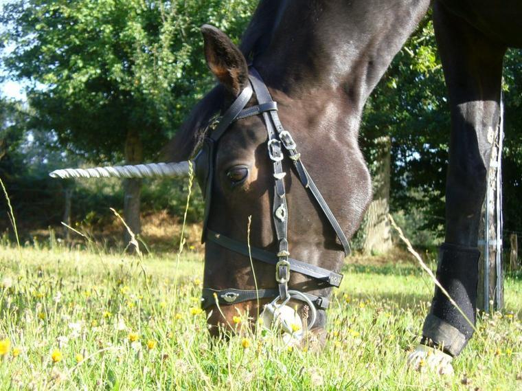 """""""Le pas de ma jument berce ma vie. A cheval, je me sens libre, forte, toute puissante. Quand je rentre à l'écurie, que je me laisse glisser le long de ma monture pour l'enlacer et la remercier du bonheur qu'elle me donne, c'est comme si j'avais été délestée de mes soucis, rajeunie, lavée de l'intérieur. Prête de nouveau à affronter le quotidien."""""""