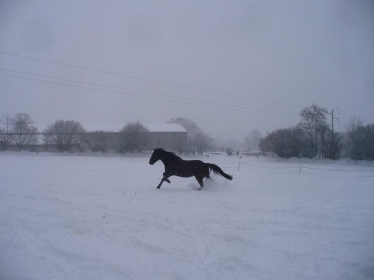 """"""" Si le cheval connaissait sa force, serait-il assez fou pour accepter le joug, comme il le fait ? Mais qu'il devienne sensé et s'échappe, alors on dira qu'il est fou..."""""""