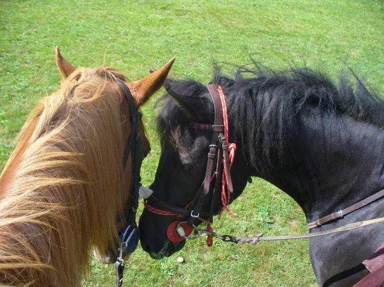 """"""" Souvent déçu par les humains, je me réfugiais auprès des chevaux..."""""""