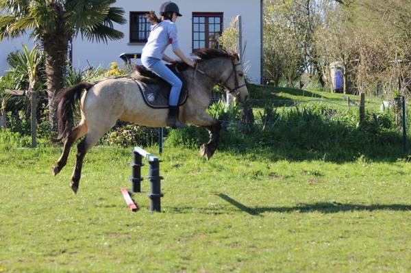 """""""L'important n'est pas le niveau que votre cheval possède. L'important, c'est ce qu'il vous donne chaque jour. Sa volonté malgré l'incompréhension, son travail malgré les erreurs, sa coopération malgré sa force. """""""