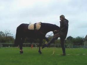 """""""Avoir un cheval, c'est déjà posséder son propre paradis."""""""