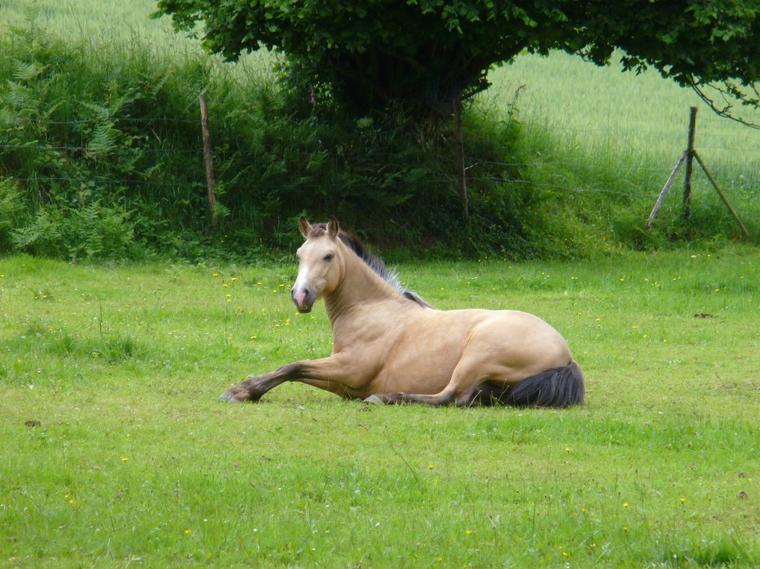 L'équitation c'est comme l'amour: Il faut être deux et ce mettre d'accord...