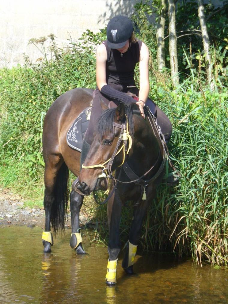 Un bon cavalier fait progresser un cheval avec une voie rassurante et des caresses et non avec une cravache et une paire déperon!