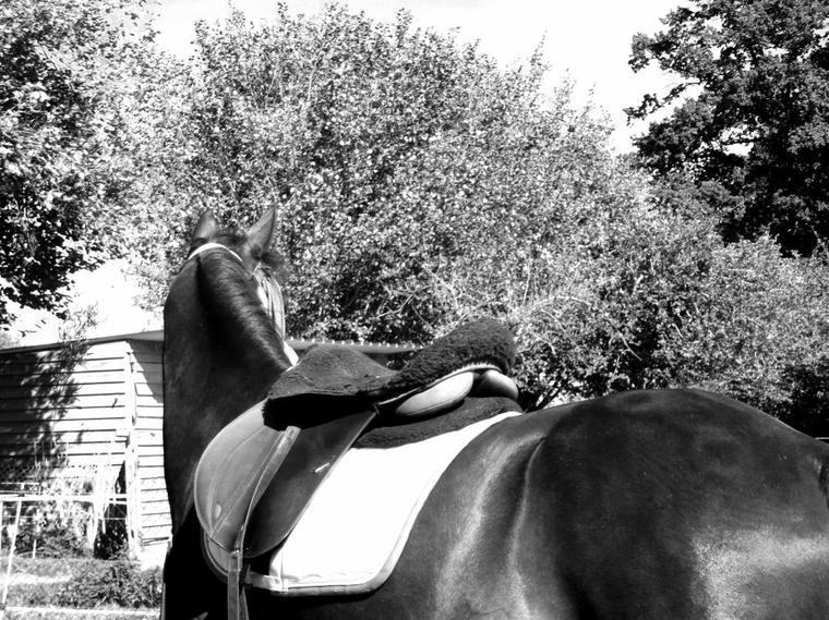 """"""" Un Cheval, c'est un Compagnon qui marche à vos côtés toute votre Vie. """""""