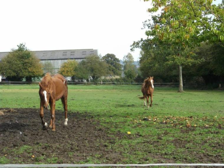 'Certains chevaux vous testent,  certains vont vous enseigner,  et certains vont faire ressortir le meilleur en vous.'