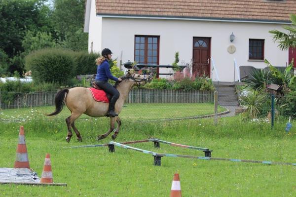 """""""Pour le cheval, il n'y a pas de frontière entre ses ressentis et ses actes, chaque instant passé avec vous est pour lui l'occasion de juger si vous êtes aussi fin qu'une créature dont la survie dépend de sa capacité à analyser son environnement avec précision."""""""