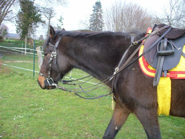 """"""" C'est en écoutant la respiration du cheval,que le cavalier se sent à l'aise """""""