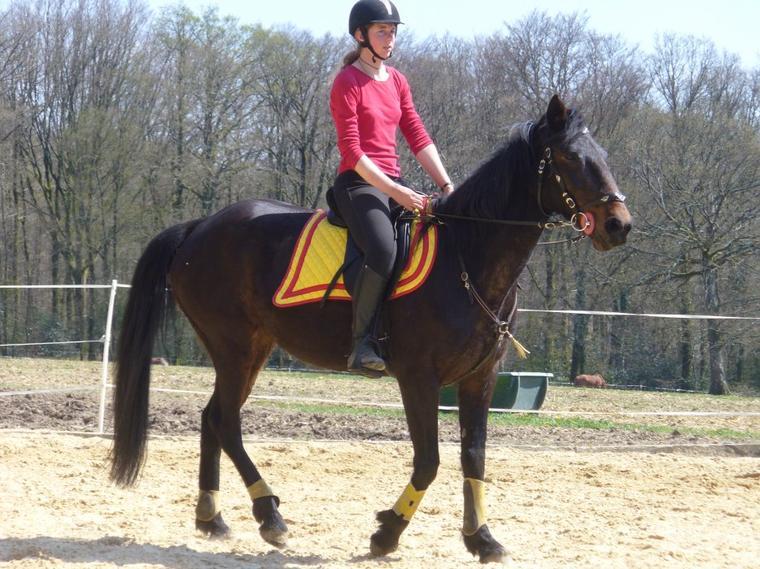 On s'accorde à dire la beauté singulière d'un cavalier et sa monture. Cette image conjugue la grâce, l'élégance, la race qui lui donne sa haute noblesse.