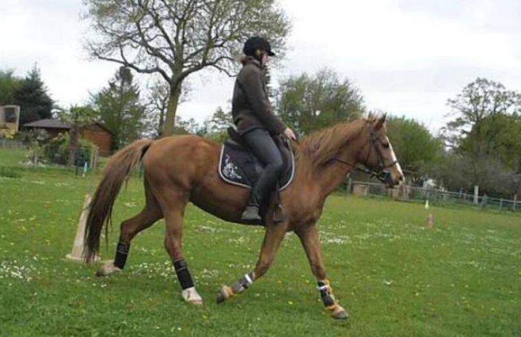 Les chevaux entraînent notre vigilance... nous gagnons une aptitude qui a des conséquences sur notre vie entière...