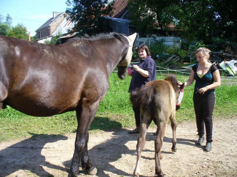 """"""" Etre aimé par un cheval ou par un autre animal doit nous remplir d'humilité et de reconnaissance, car nous ne le méritons pas. """""""