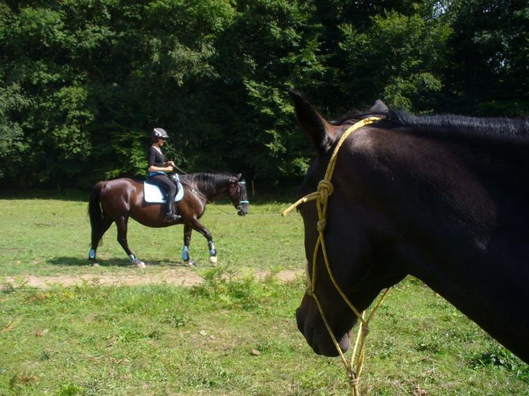 """""""Tant que tu as un père, apprends à découvrir les autres ; tant que tu as un cheval, apprends à découvrir le pays."""""""