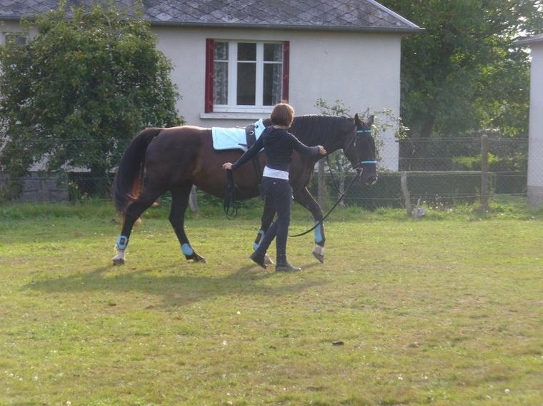 """"""" Le cheval est un bon maître, non seulement pour le corps, mais aussi pour l'esprit et pour le c½ur."""""""
