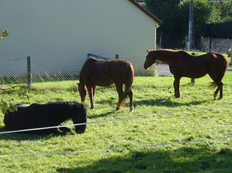 """"""" Selon la façon de monter à cheval, on est un cavalier ou un garçon d'écurie."""""""
