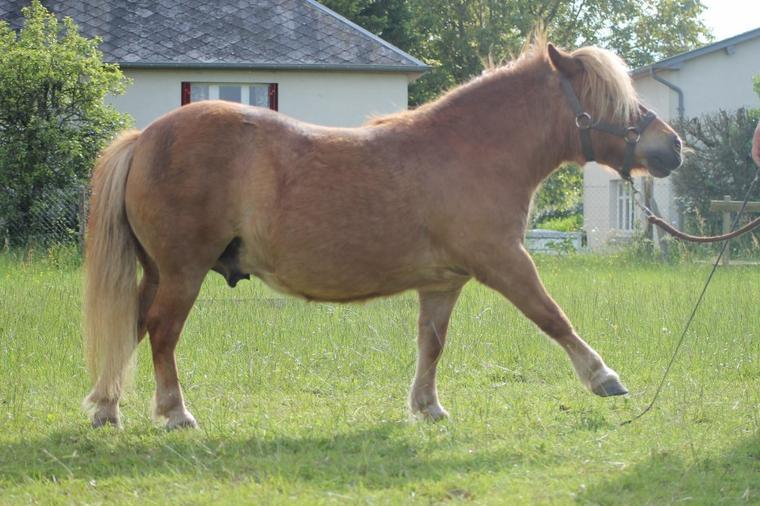 """""""Le cheval était un moyen de se montrer, il est devenu un moyen de se trouver"""""""