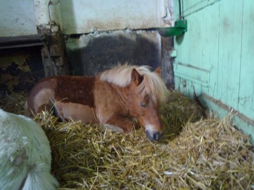 Equitation un jour, Equitation toujours ! ♥