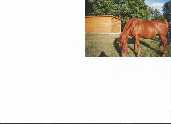 Voici nos dernier chevaux adoptés en photo chez leurs adoptants  FILOU , DJEBELIA