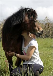 Votre cheval vous ressemble comme votre reflet dans un miroir.