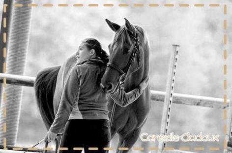 Article N°1 : La complicité Cheval/Cavalier. ♥