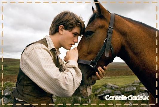 Article N°2 : Les sentiments des chevaux ♥