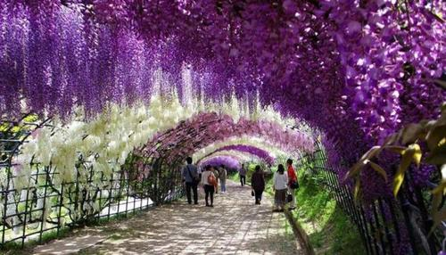 Plus beaux paysages du Japon