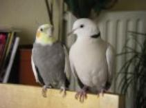 A tout les passionnés d'oiseaux !