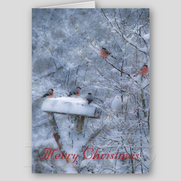 Je vous souhaite un joyeux noël à tous mes amis éleveurs !!! I wish you a Merry Christmas to all my breeder friends !!! Vi auguro un buon Natale a tutti i miei amici allevatori !!!  Les deseo una Feliz Navidad a todos mis amigos criadores !!! Ich wünsche Ihnen ein frohes Weihnachtsfest an alle meine Freunde Züchter !!! Ik wens u een vrolijk kerstfeest aan al mijn vrienden fokkers !!!
