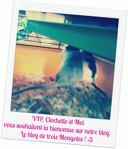 « Même que mes ratons a moi et ben elles vivent dans l'espace ! » ♥.