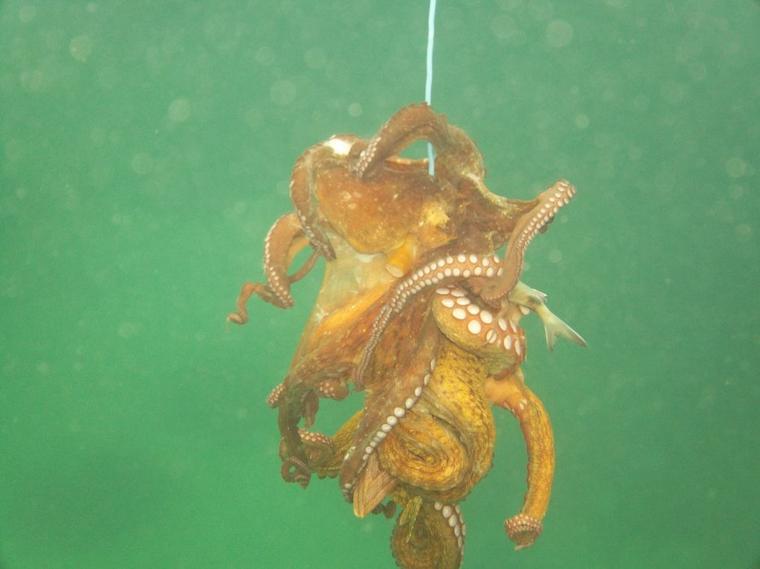 à travers le monde sous marine...