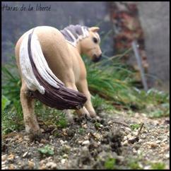 ~ Présentation des chevaux n°1 ~