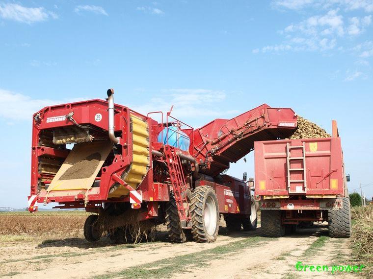 patates 2011