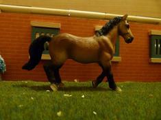nouveaux chevaux et autres :D