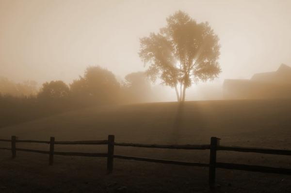 Météo du jour... et des jours précédents...  Brouillard