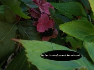 Prunette dans le jardin 1