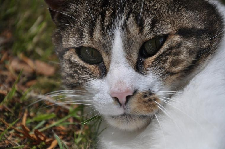 Des photo de mon chat qui est juste...magnifique ♥