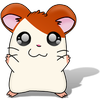 Hampton The Hampster -- [ Hamster Dance Song ]