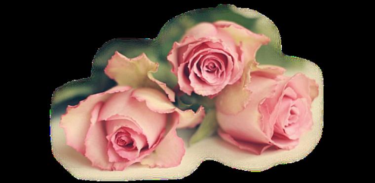 Joyeux Anniversaire Malika Blog De Josy41